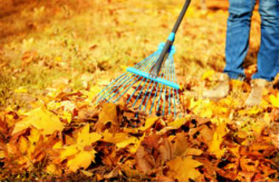 Lawn Care in the Fall and Winter