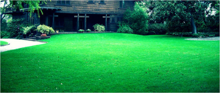 Lawn Maintenance in Boise